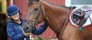 equine-banner-rider